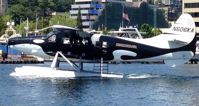 Cool Turbo Otter